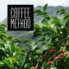 Coffee Method farms