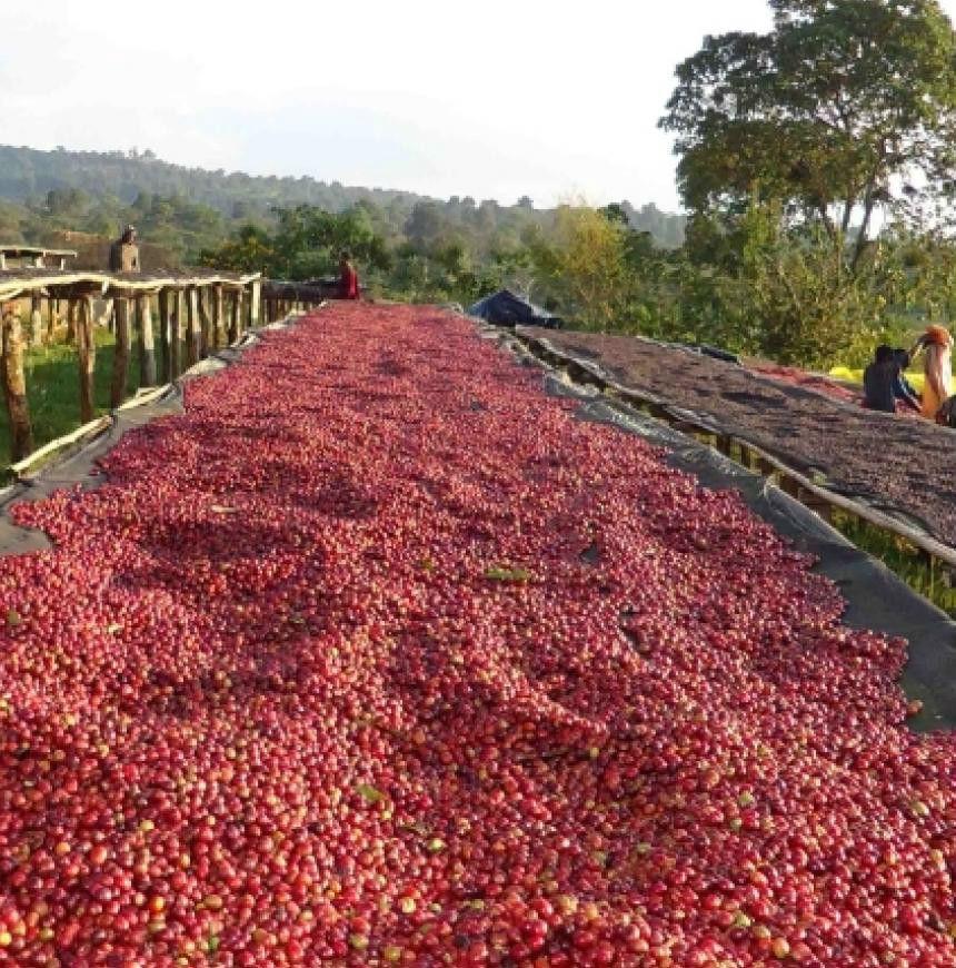Ethiopia Beans